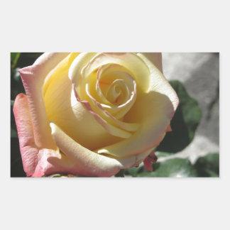 Adesivo Retangular Única flor do rosa amarelo no primavera