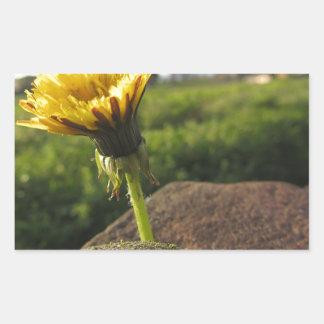 Adesivo Retangular Wildflower amarelo que cresce em pedras no por do