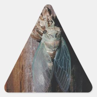 Adesivo Triangular A cigarra seca suas asas