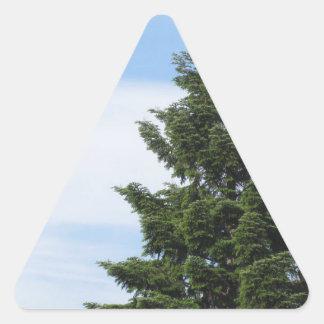 Adesivo Triangular Árvore de abeto verde contra um céu claro