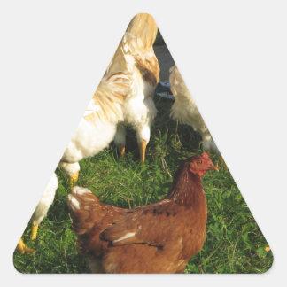 Adesivo Triangular Aves domésticas