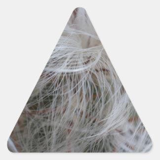 Adesivo Triangular Cacto do ancião