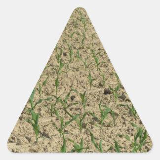 Adesivo Triangular Campo do milho do milho verde na fase inicial
