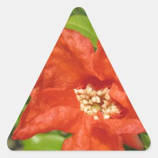 Adesivo Triangular Close up da flor vermelha da romã