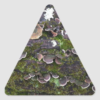 Adesivo Triangular divertimento mossy do cogumelo