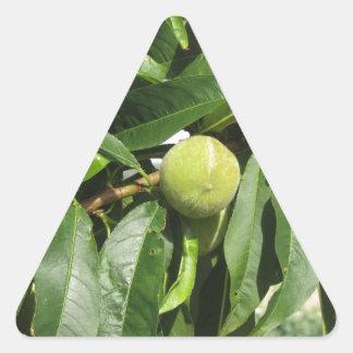 Adesivo Triangular Dois pêssegos verdes unripe que penduram em uma