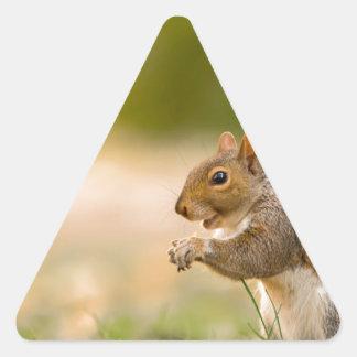 Adesivo Triangular Esquilo com fome