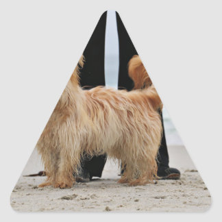 Adesivo Triangular Farris - Lucy - raça misturada