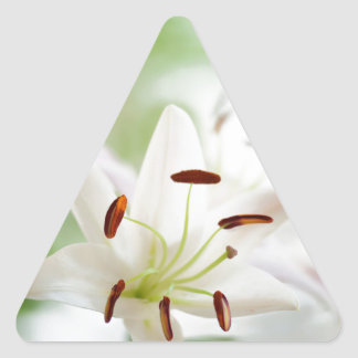 Adesivo Triangular Flor do lírio branco inteiramente aberta