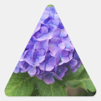 Adesivo Triangular Flores de um hydrangea do francês (macrophyl do