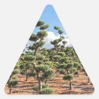 Adesivo Triangular Formas bonitas do topiary nas coníferas
