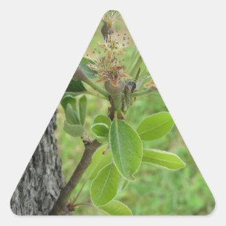 Adesivo Triangular Galho da árvore de pera com os botões no primavera