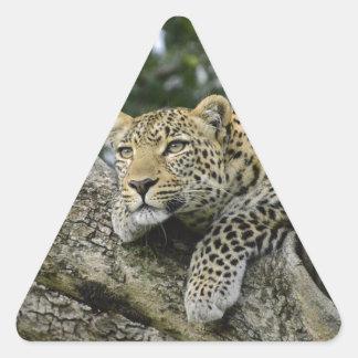 Adesivo Triangular Gato selvagem animal do safari de África da árvore