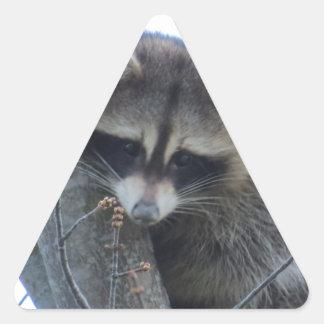 Adesivo Triangular Guaxinim
