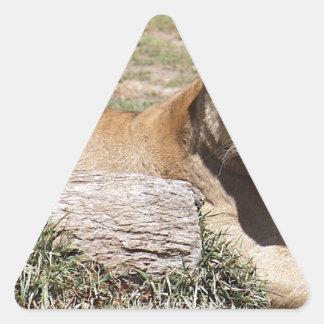 Adesivo Triangular Leão