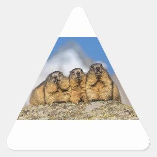 Adesivo Triangular Marmota alpinas