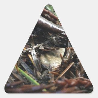 Adesivo Triangular Não tropece o cogumelo