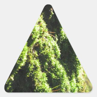 Adesivo Triangular O musgo verde no detalhe da natureza de musgo