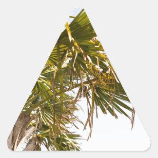 Adesivo Triangular Palmeira da costa leste Myrtle Beach famoso
