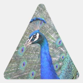 Adesivo Triangular Pavão