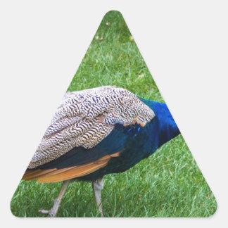 Adesivo Triangular Pavão 2
