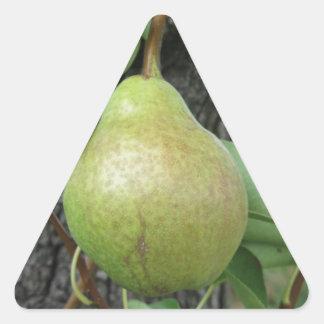 Adesivo Triangular Peras verdes que penduram em uma árvore de pera