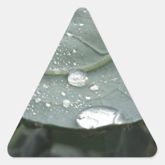 Adesivo Triangular Pingos de chuva nas folhas da couve-flor