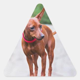 Adesivo Triangular Retrato do cão vermelho do pinscher diminuto