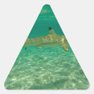 Adesivo Triangular Shark in bora bora