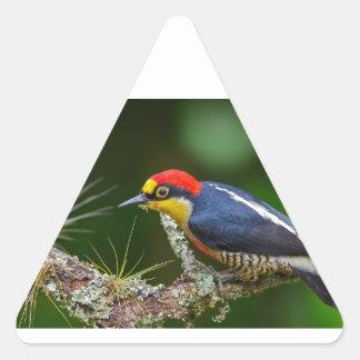 Adesivo Triangular Um pica-pau fronteado amarelo em Brasil