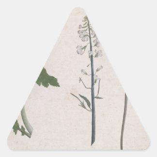 Adesivo Triangular Uma planta de rabanete, uma semente, e uma flor