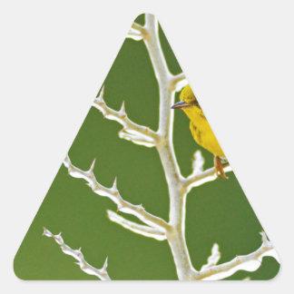 Adesivo Triangular Uma toutinegra masculina do pinho empoleirada em