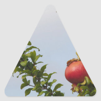Adesivo Triangular Única fruta vermelha da romã na árvore nas folhas