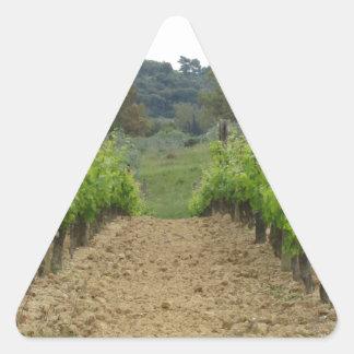 Adesivo Triangular Vinhedo no primavera. Toscânia, Italia