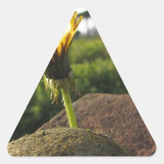 Adesivo Triangular Wildflower amarelo que cresce em pedras no por do
