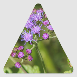 Adesivo Triangular Wildflowers roxos do Ageratum