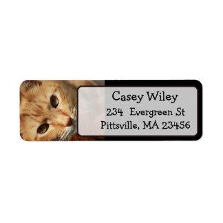 Adicione a foto do seu gato a esta etiqueta de