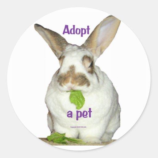 Adote um animal de estimação adesivos em formato redondos
