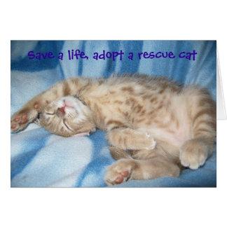 Adote um cartão do gato do salvamento