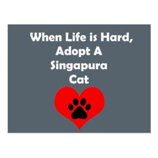 Adote um gato de Singapura Cartão Postal