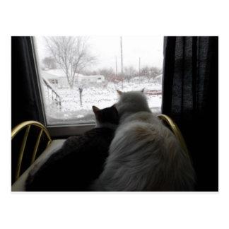 afagado no cartão nevado do gato do dia
