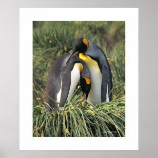 Afago do pinguim pôster