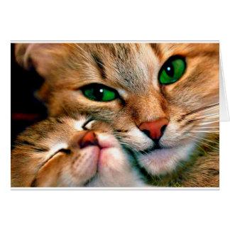 Afagos do gato cartão