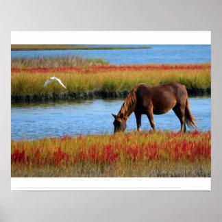 Afixar cavalo nos pântanos poster