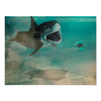 Afixar Shark Poster