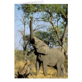África, Botswana, delta de Okavango. Africano 2 Cartão Comemorativo