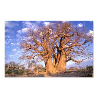 África, Botswana, delta de Okavango. Baobab Fotografias