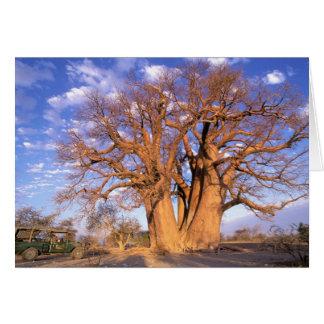 África, Botswana, delta de Okavango. Baobab Cartão Comemorativo