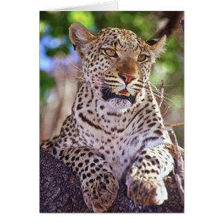 África, Botswana, delta de Okvango, leopardo Cartão Comemorativo