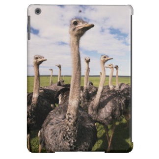 África do Sul, opinião a avestruz Capa Para iPad Air